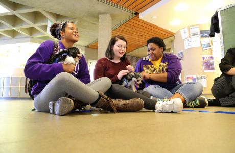 Students de-stressing with puppies